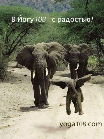 slonenok108